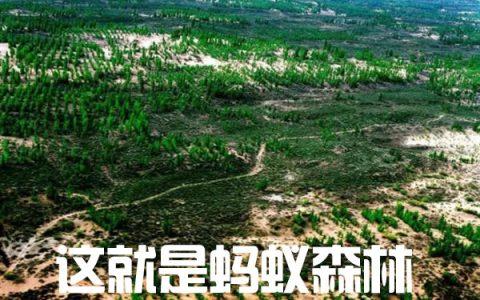 蚂蚁森林长成后的样子:绿野仙踪!