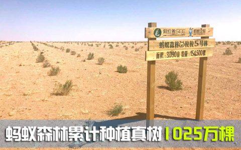 蚂蚁森林累计种植真树1025万棵