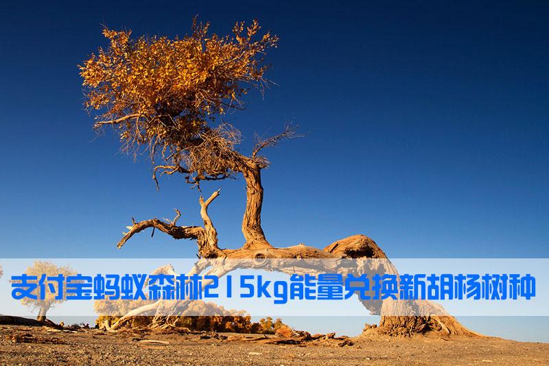 支付宝蚂蚁森林 215kg 能量兑换新胡杨树种